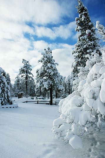 Snow-Covered Trees and Landscape