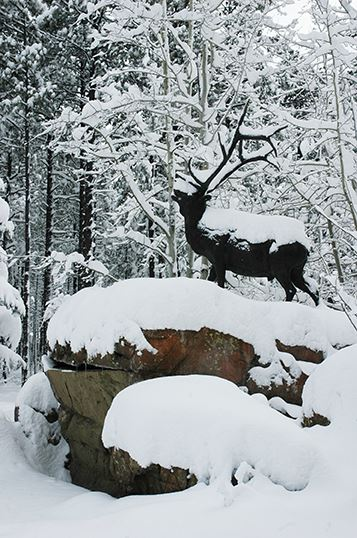 Statue of an Elk Covered in Snow, Surrounded by Trees